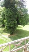 Engleski vrt