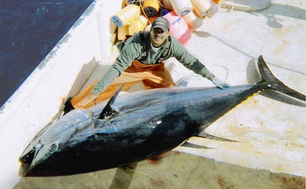 Stopping illegal tuna coming to market