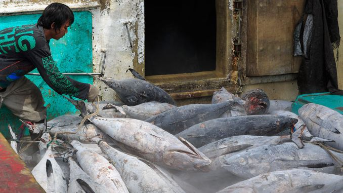 Greenpeace global tuna giant commit sustainable, socially-responsible seafood