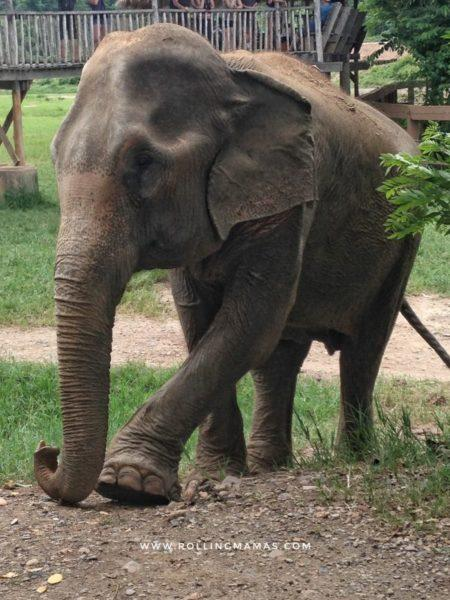 Elephant Nature Park con bambini