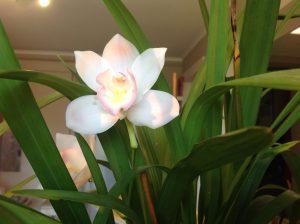 Een mooi bloem als geluksmoment van Berte