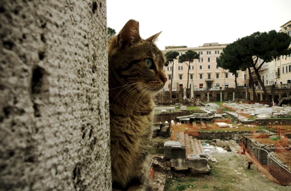 gatti-largo-argentina