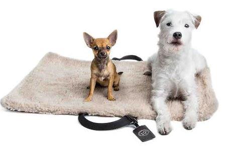 Même les chiens ont leurs bagages TUMI….