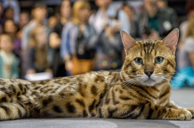 Animal Expo 2015 Chat