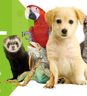 Animal Expo 2014