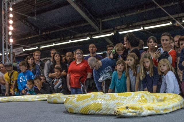 Animal Expo - NAC Serpent