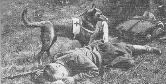 Chien secours aux soldats blessés Première Guerre Mondiale