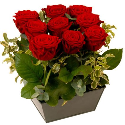 Saint VALENTIN Roses Rouges