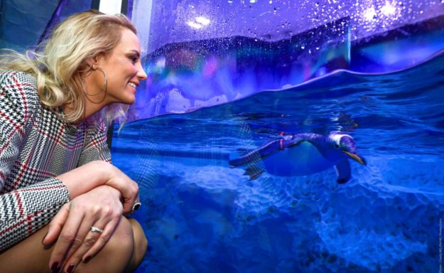 Elodie Gossuin marraine de Flocon, le bébé manchot royal Sealife Val d'europe