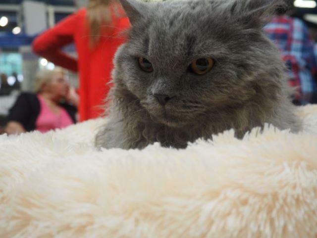 Quel regard pour ce chat...