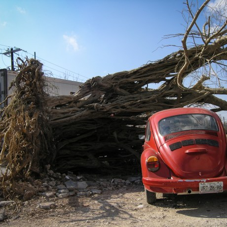 Uprooted, 2005. Huracán: In Wilma's Shadow. Archival pigment print, 11x15