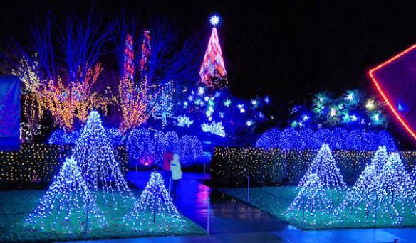 Winter Lights, NC Arboretum Asheville