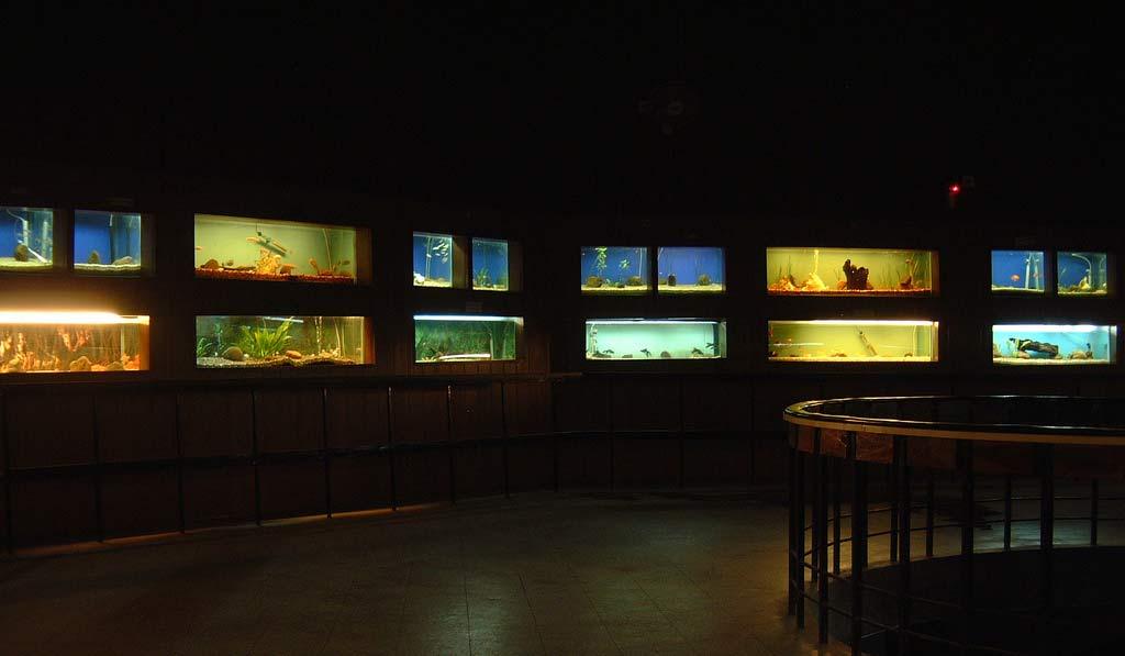 Bangalore-Aquarium