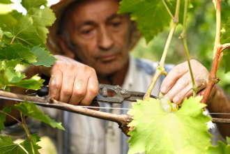 Banii europeni pentru fermierii din Romania