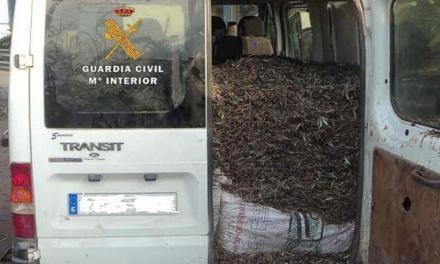 Acuzat că a furat 21 de tone de măsline la Sevilla