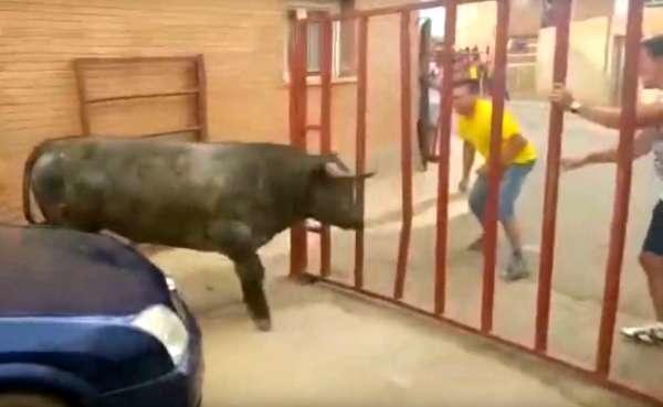 Fetiță româncă de 7 ani împunsă de taur la Zaragoza