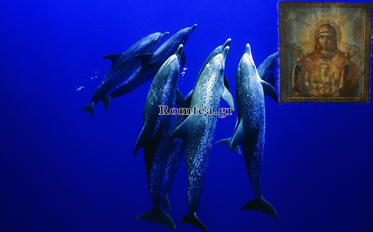 dolphins icon