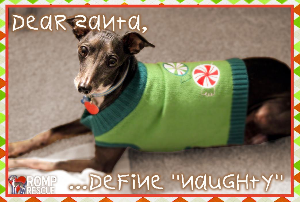 Christmas Card Ideas For Your Dog ROMP Italian Greyhound