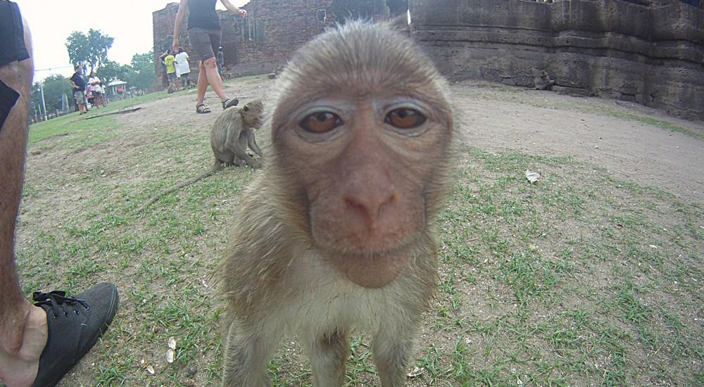 Lopburi Monkey face