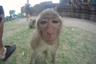 Lopburi Monkey face