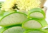 Photo of Az orvosi Aloe vera felhasználása + recept