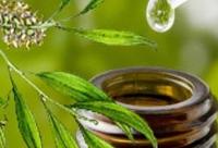 Photo of A teafa illóolaj ,mint fertőtlenítő,tisztítószer +recept