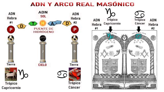 adn-vs-arco