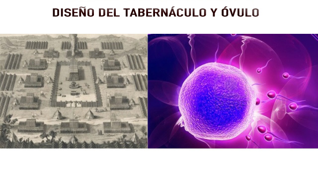 tabernaculo-y-ovulo