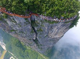 tianmen china tree