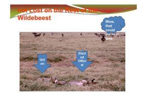 wildebeest-slide