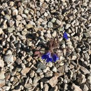 A single wildflower in a sea of rocks