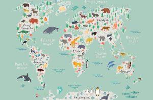 safari kids wallpaper mural