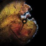 05. MARCELLO DI FRANCESCO - DSLR FISH
