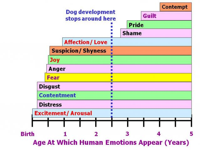 PsychologyToday: Which Emotions Do Dogs Actually Experience?