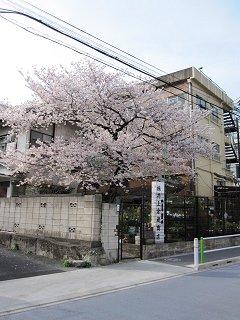 この木は桜だったんだ…