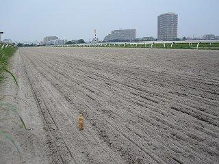 広大な練習馬場