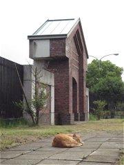 自衛隊十条駐屯地の敷地の中にいた猫