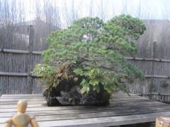 盆栽美術館の作品のひとつ