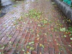 台風一過の道路…