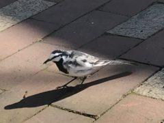 この鳥は?