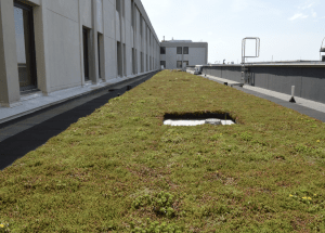 At the Ralph H. Johnson VA Medical Center in Charleston, a modular green roof system was installed to improve the quality of life for patients in the extended care wing.