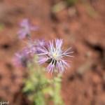 Blume auf Sardinien mit f/3,2