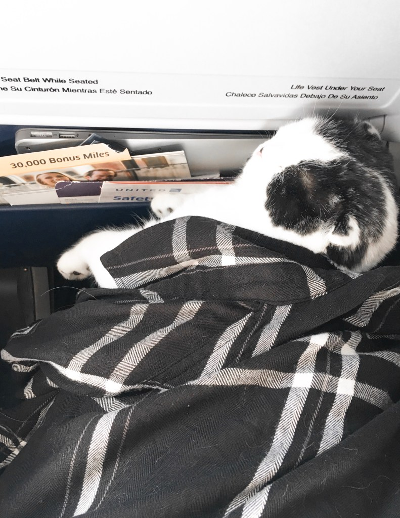 How to Fly with Your Pet Lacy Transeau