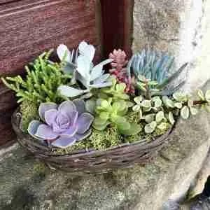 Etsy gift guide succulent willow basket kit