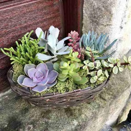 Mothers Day Etsy gift guide succulent willow basket kit Roomy Home UK