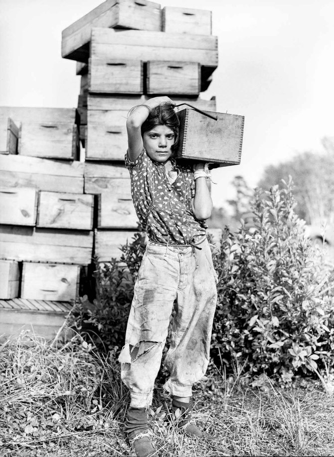 Girl picker at cranberry bog.Three-fourths of the cranberry pickers are children.Burlington County, New Jersey 1938.