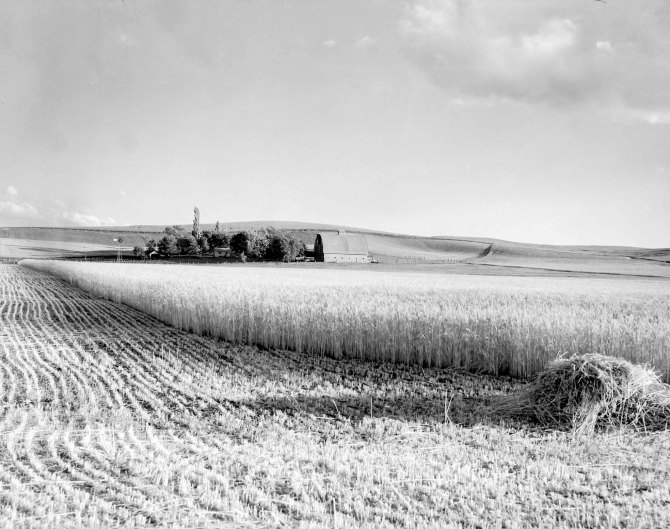 Wheat farm. Whitman County, Washington. 1936.