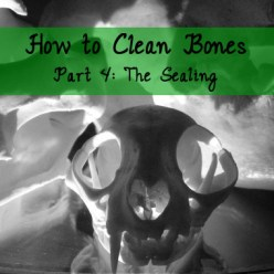 how to clean bones tutorial part 4 sealing