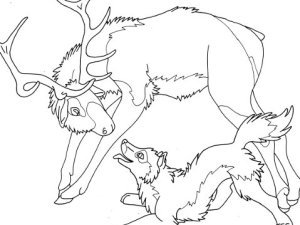 elk wolf coloring page