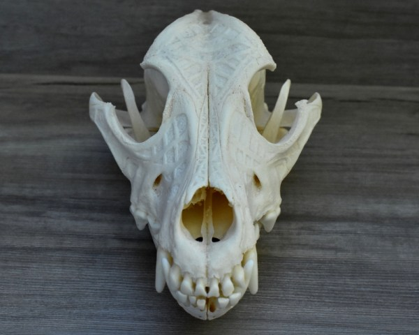 Dog Skull With Abstract Engraving